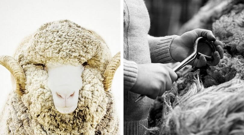 Quality Merino Wool